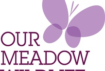 Our meadow wildlife / by Our wildlife 2012
