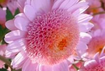 COLOR: Tickle me Pink or Purple / by Cindy Carlson