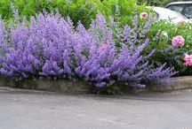 Trädgårdar / Blommor och buskar mm
