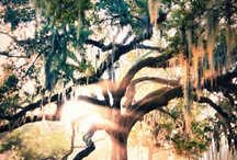 Trees <3 / by Kaitlynn Gottenborg