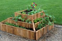 Garden: Planters