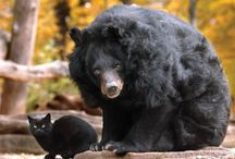 cat with bear / by Summer Campsall