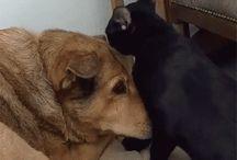 Gifs de Pets