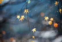 Autumnnn!! ❤