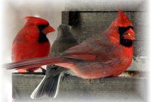 For the birds! / Birdhouses, bird feeders and birds! / by Flea Market Gardening