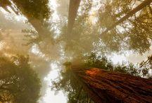 Le ombre e gli alberi alti