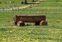 Western Australian Wineries