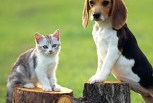 Dogs and Cats are Friends!!
