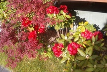 Mi jardín / Mi jardin