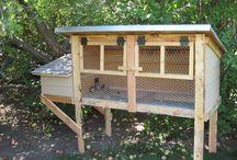 Hens / Quails