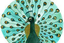 Peacock / by Multitasking Mumma