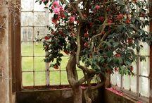 Decadent gardens