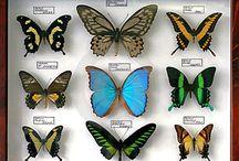 creatief vlinder