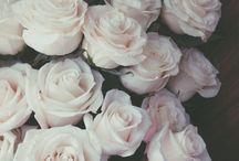 jardines de rosas / jardines bonitos con rosas