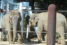 Zoo / Zoos rund um die Welt