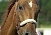 slávne a známe kone