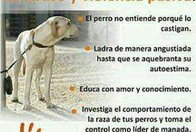 Amor animal