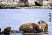 animal parenthood