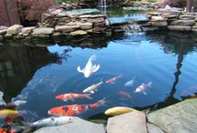 "Koi Ponds / This board is dedicated to #KoiPonds we have seen that have made us go... ""WOW!"""