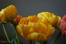 Photos by MISTY WAY / More photos here: https://vk.com/misty_way_photos