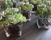 decorating and centerpieces / by Teresa Brodman