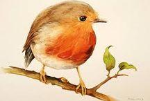 dipinti di uccelli