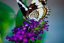 butterfly flutters by