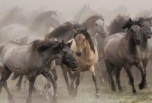 Wildlife Photography / Wildlife Photography