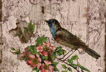obrazky s ptacky