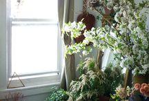 plantes / intérieurs