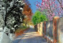 Garden and Landscaping  / by Christa