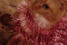 #CAT#animal