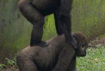 Animals   ( Primates )