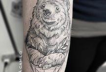 [Медведи]