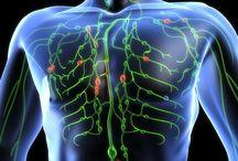 IMUNITA, chrípka, vírusy, baktérie, lymfatickéý systém...