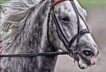 Ideas for hobbyhorses