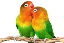 Fotos de Aves/Pájaros Petclic