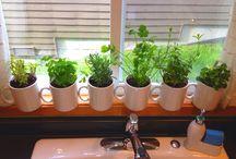 Indoor garden ideas / by Laura Corson