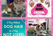 My Grooming - The job I love! / My grooming shots
