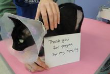 Thank You for supporting VDACS / This board will have pictures of VDACS adoptable cats past and present saying Thank You