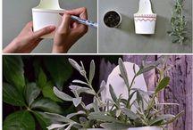pot des fleurs