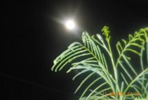 supermoon and lunacy