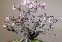 Ikebana flowers bonsai