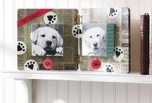 pet ideas / by Kay Huey