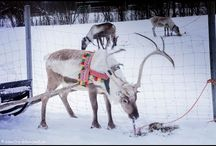 Sami Siida Alta / Reindeer adventure camp