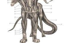 creative anatomy