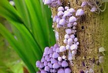 Mushroom Fascination