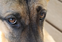 Dogs / by Diane Killingback