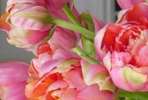 Botanical,Tulips from my Homeland / I like the Parrot Tulips or the Peonie Tulips most.... / by Gerry Teuben