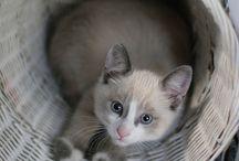 Chats adorables